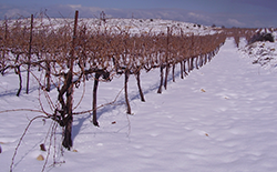 Wineyard_smallbox_snow