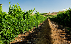 Wineyard_smallbox2